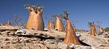 Socotra, North Indian Ocean
