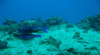 Scuba Diving in the waters of Cozumel