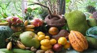 Various fruits as the await you on the fruit farm.