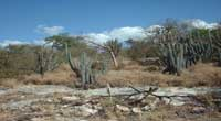 The Guanica Dry Forest