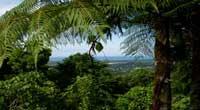 The El Yunga Rainforest