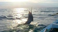 isla-cerralvo-fishing