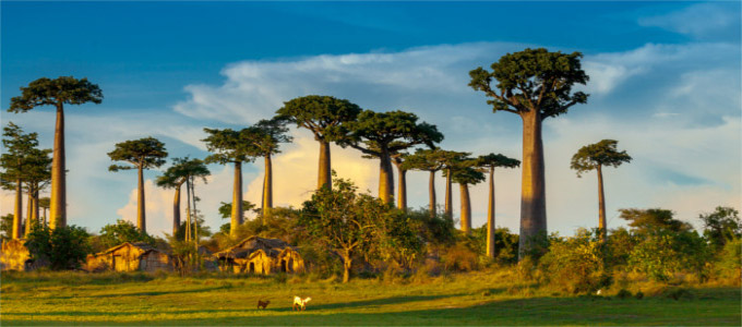The Madagascar landscape is like no other on earth.