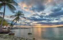 Beautiful Palm Tree's on a beach in Martinique